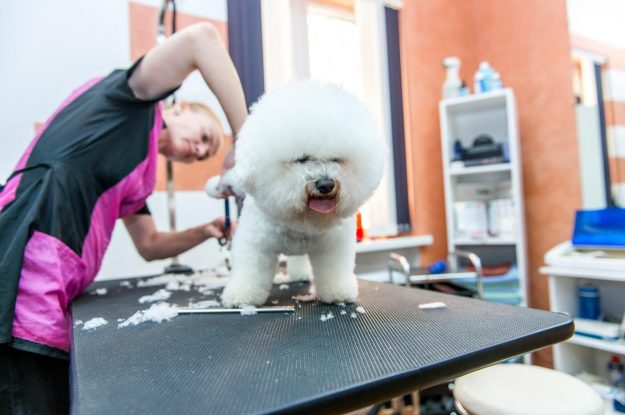 Heat Stress In The Grooming Salon